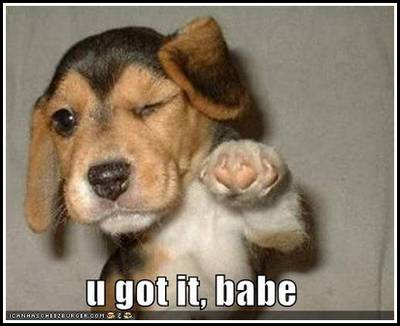Loldog-funny-pictures-you-got-it-babe